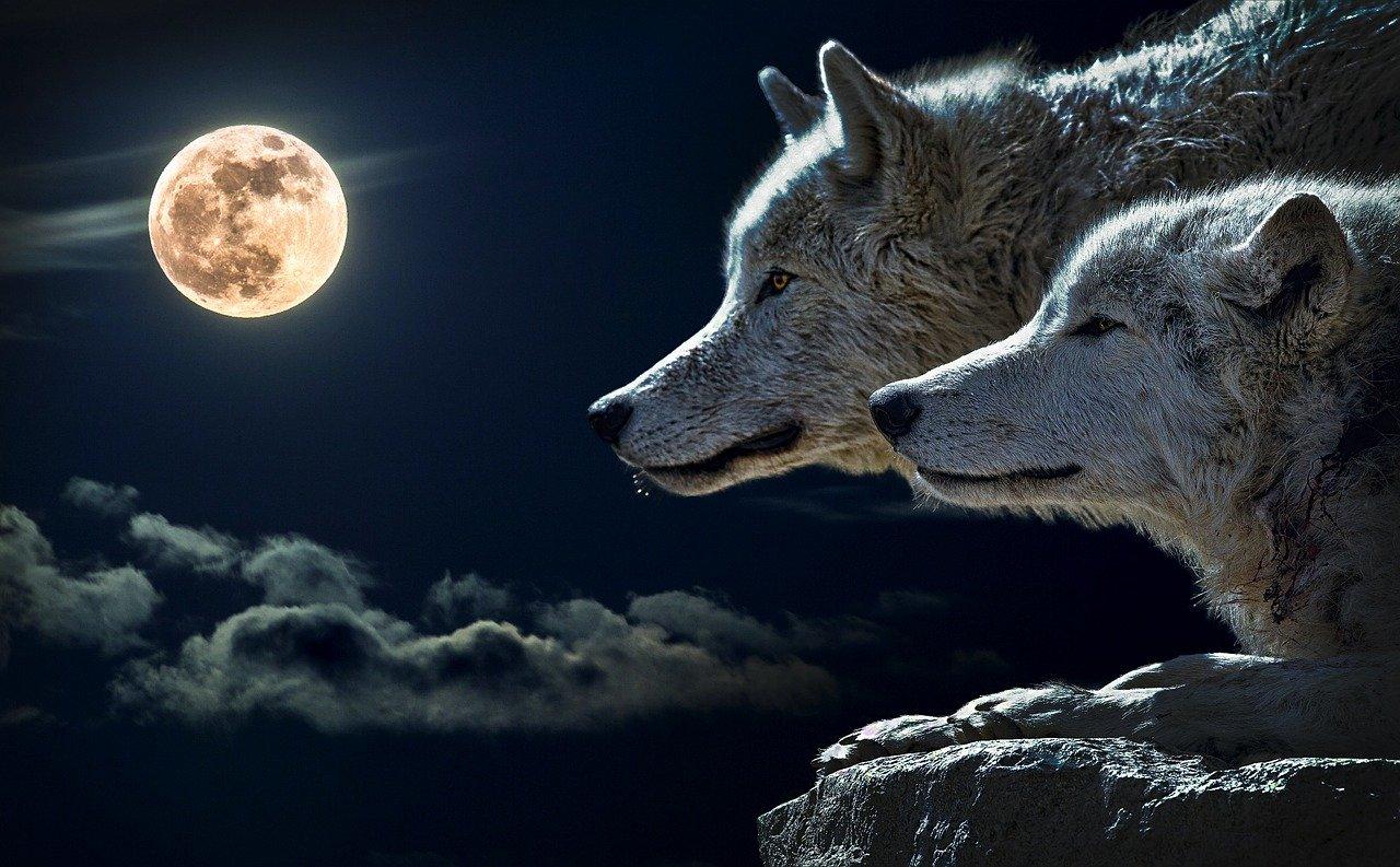 символ волка