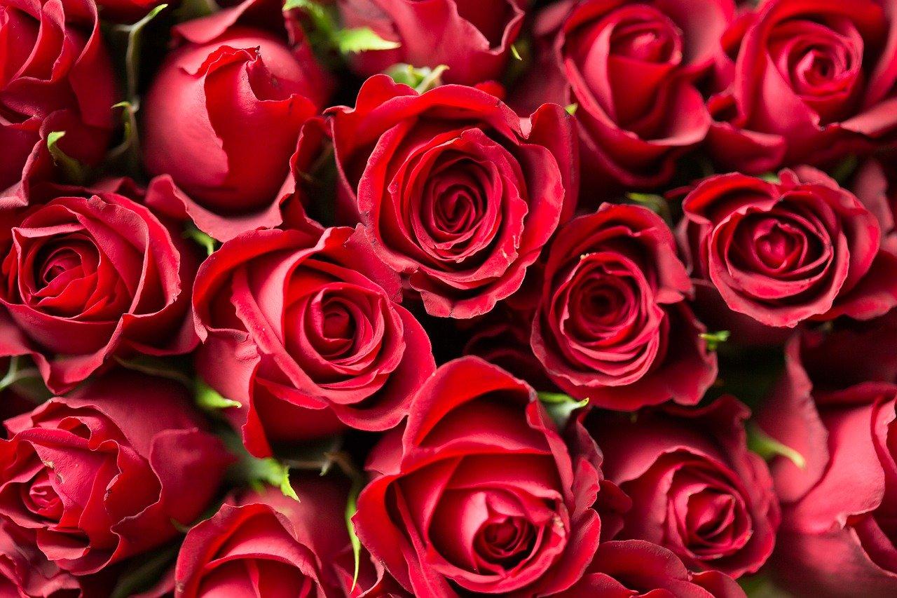фото розы